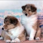 Arisha & Alessia